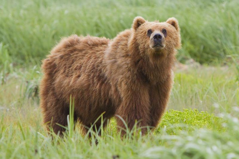 Medve marcangolta szét a gondozóját a látogatók szeme előtt