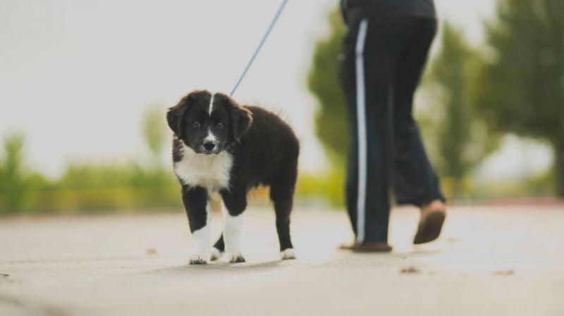 Belerúgtak a kutyájába, majdnem megölte a támadót a debreceni férfi