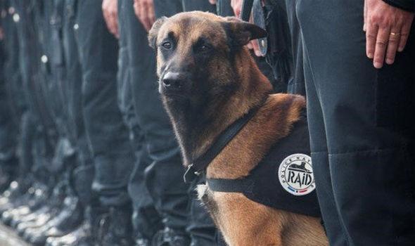 Így könnyezi meg a világ a terroristák által lemészárolt rendőrkutyát
