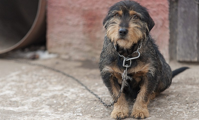 Negyven kutyát altattak el Karcagon a lánctörvény miatt