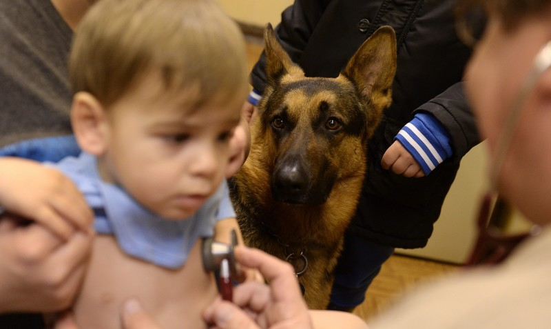 Kitiltották a rendelőből a stresszoldásban segédkező terápiás kutyát
