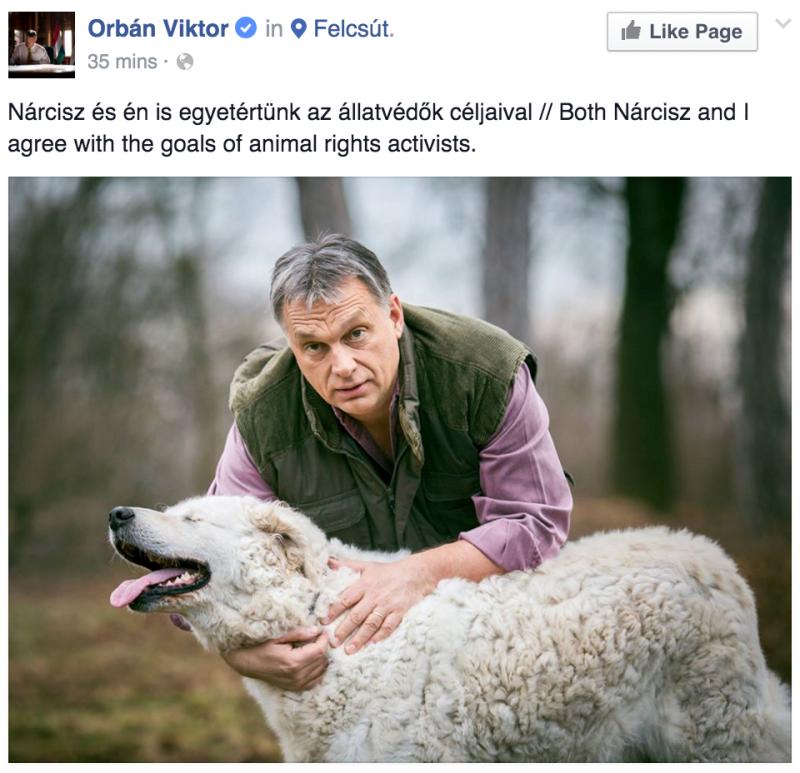 Hatvanpusztán élhet Orbán titokzatos kutyája