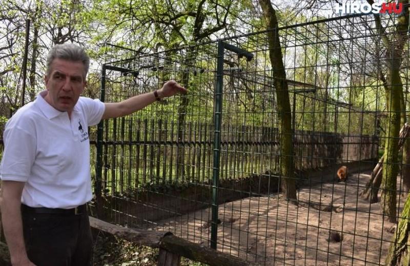 Megvan a Vadaskertből elszökött róka