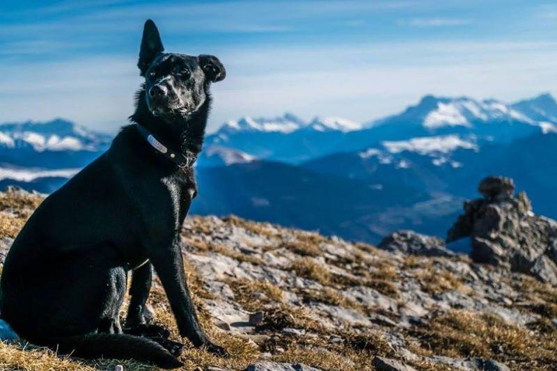 Egy magyar vadász lelőtte a francia túrázók kutyáját, majd elmenekült a tetemmel