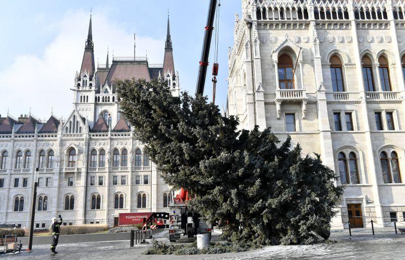 Ledőlt az ország karácsonyfája