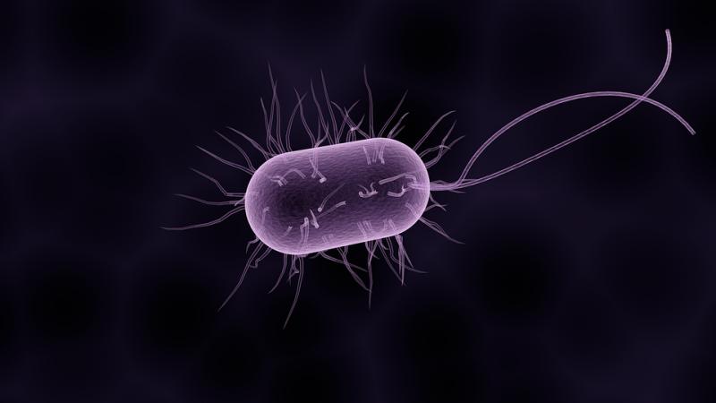 Szuperbaktérium bukkant fel, ami minden antibiotikumnak ellenáll
