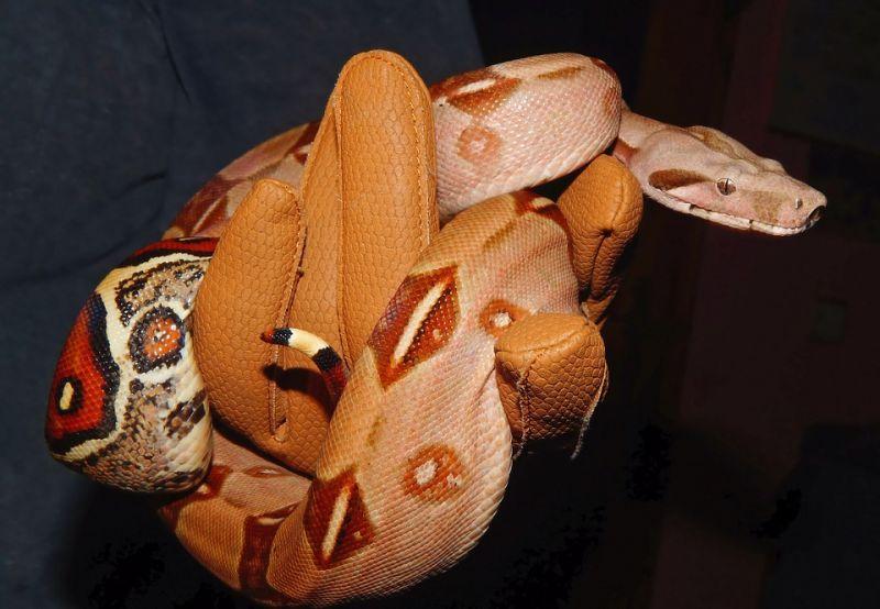 Megfagyott az óriáskígyó, játszótéren találták meg