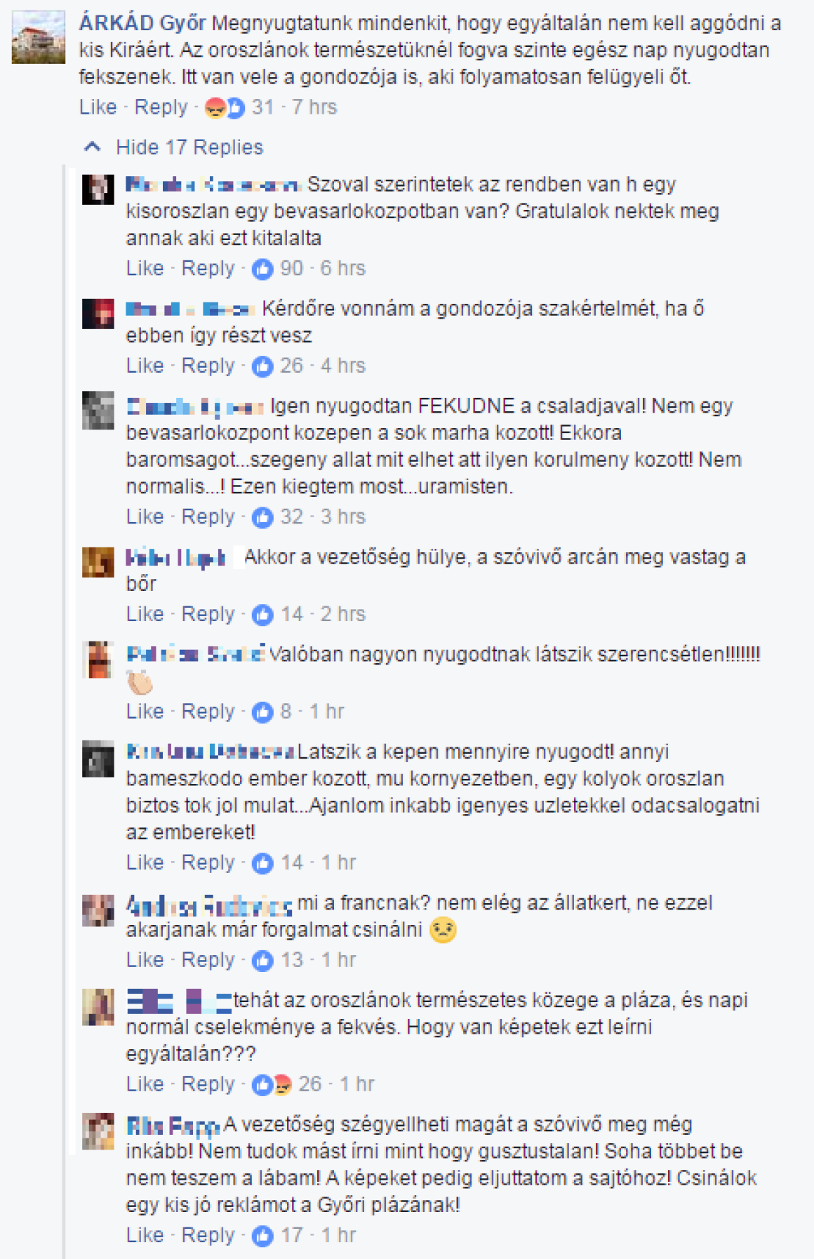 Kisoroszlánt stresszelnek szét a győri Árkádban, háborog az internet