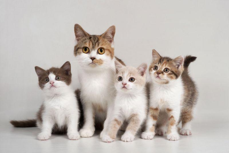 Állatkínzással vádolják a nőt, aki 42 macskát tartott a kocsijában