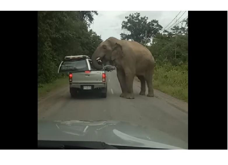 Ne menj kocsival éhes elefánt közelébe, ha valami finomat szállítasz!