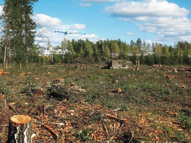 """A budaörsi polgármester szerint """"világos törvényszerűség"""", hogy az erdő helyett jobb a beton"""