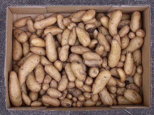 Napi 2800 forintért szedik a krumplit a szíriai menekült gyerekek