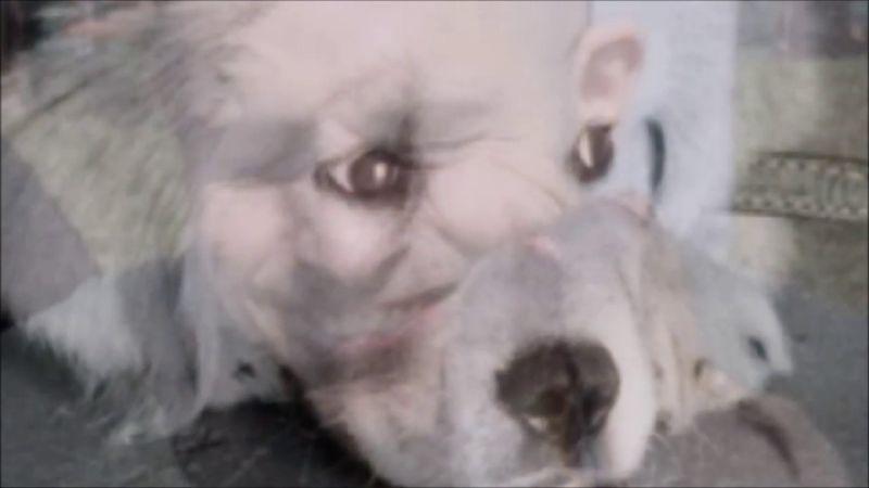 Brutális: kutyákat darálhattak le Kocséron, öt kutyát sikerült kimenteni a horrortanyáról