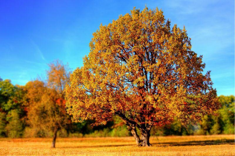 A melegebb arcát mutatja az ősz a hétvégén
