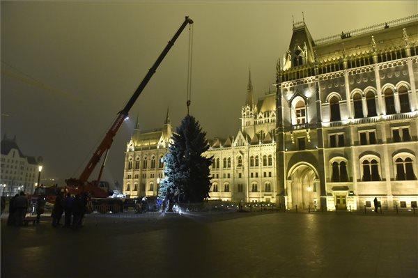 Felállították az ország karácsonyfáját a Parlament előtt