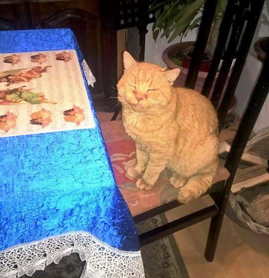Egy hét után, Hollandiából került elő egy Tolna megyéből eltűnt cica