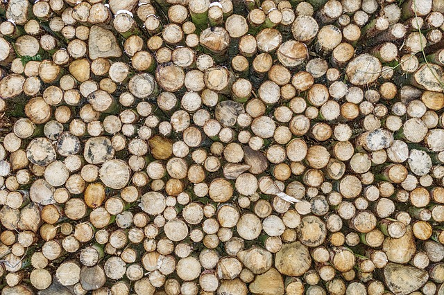 A Nébih a tűzifahirdetések 70 százalékát töröltette a Jófogással – sokan lopott fát árultak, vagy a vevőket vágták volna át