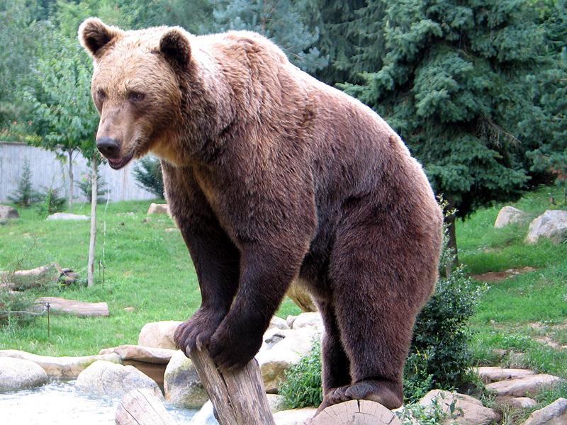 Az ország több állatkertjében is azt lesik majd, hogy megijed-e a medve az árnyékától