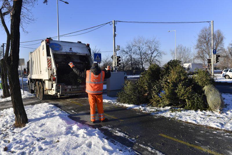 Országszerte megkezdték a kidobott karácsonyfák begyűjtését – ez történik majd a fákkal