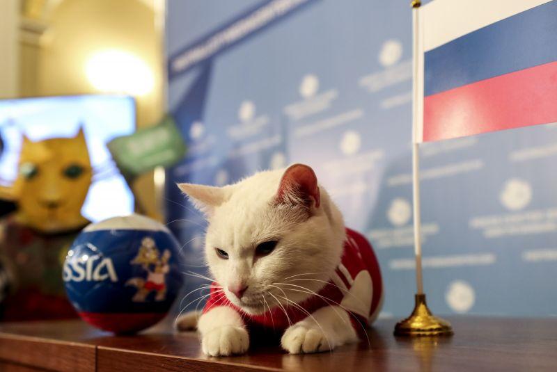 Az Ermitázs süket macskája újabb orosz győzelmet jósolt a foci vébén