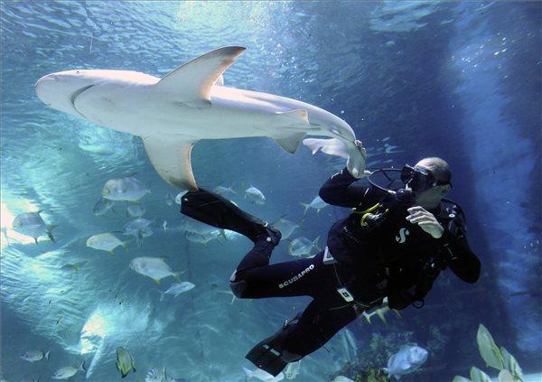Két új cápa érkezett a budapesti Tropicariumba – fotó