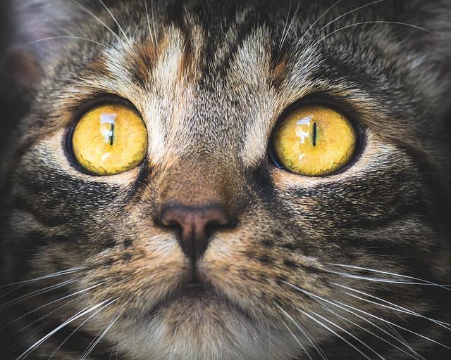 Kegyetlen: zavarta, hogy a kerítésén ül, ezért légpuskával lelőtte szomszédja macskáját egy férfi Mohácson