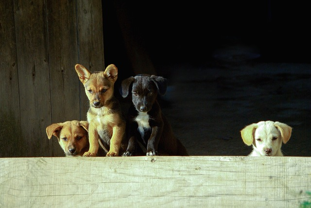 Kegyetlen: 31 kölyökkutyát zsúfolt csomagtartójába egy férfi – Zalában csaptak le a kutyacsempészre – az állatok ivóvíz és élelem nélkül utaztak