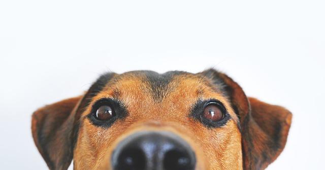 Beszorult a kutyák feje és megfulladtak – az Ikea visszahívja a kutyagyilkos vízadagolót