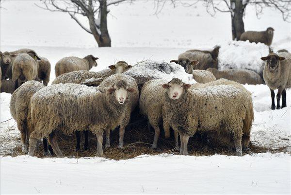 Bekeményít a tél! Csütörtökön erős szél kíséretében támad újra a hó – Kékestetőn már 32 centiméter hó van