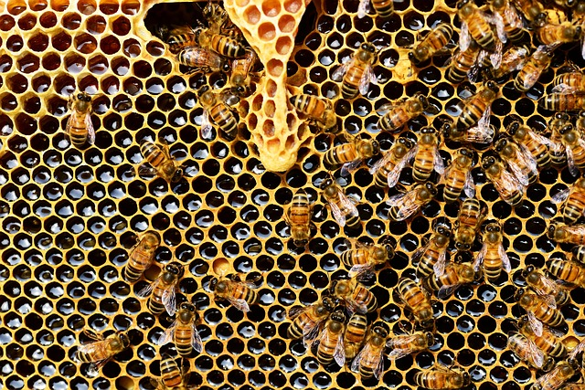 Nagy István: belföldön kell palackozni a magyar mézet