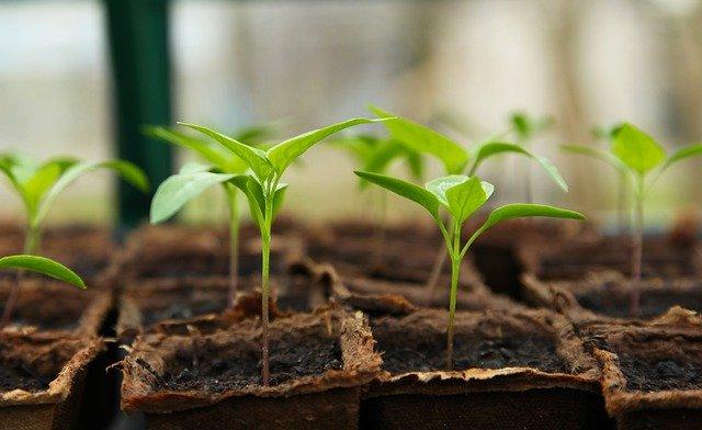 Így segít egy növényorvos