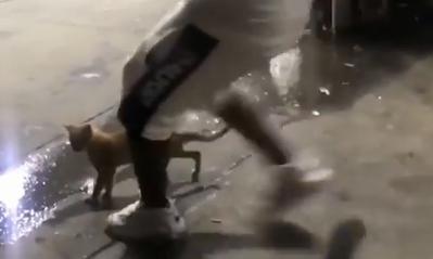 Szándékosan rúgta fel a macskát, még videóra is vették