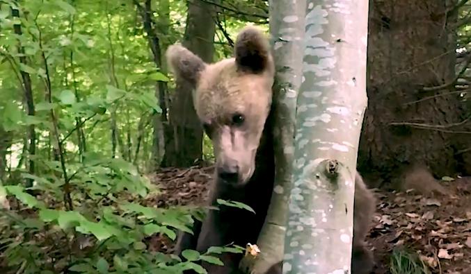 Medvével is találkozott Orbán Tusványoson – videó