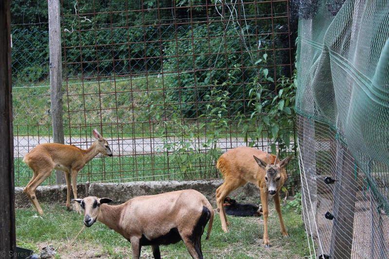 Döbbenet: ellopták egy magyar állatkert szinte összes állatát