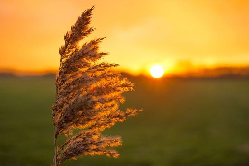Idén elmaradhat az ősz – nem látják a szakemberek a hőség végét