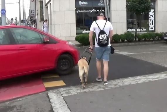 A hét legtöbb indulatot kavart videója: vakvezető kutyát sodortak el a budapesti zebrán
