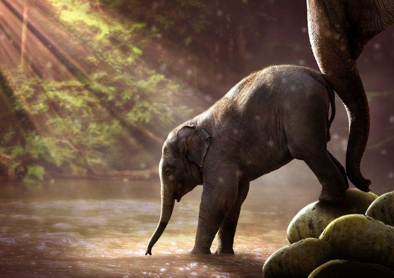Nevet kapott a Nyíregyházi Állatpark afrikai elefántborja
