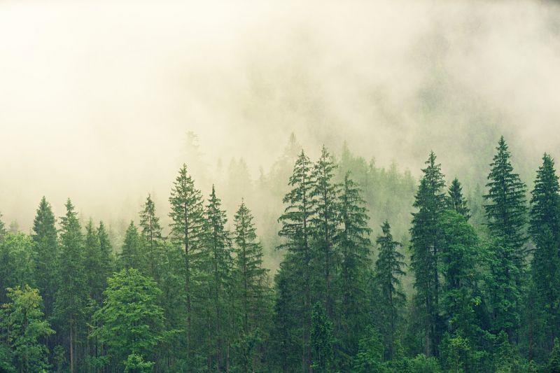 A magyar erdők világa mutatkozik be a Szabadság téren