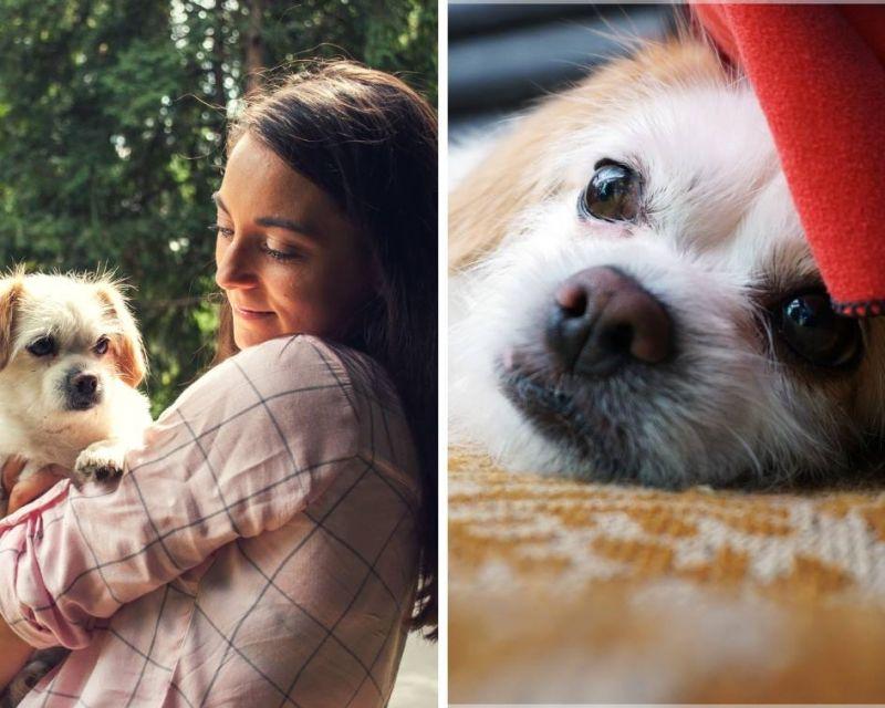 Az énekesnő szeme láttára marcangolták szét szeretett kutyáját