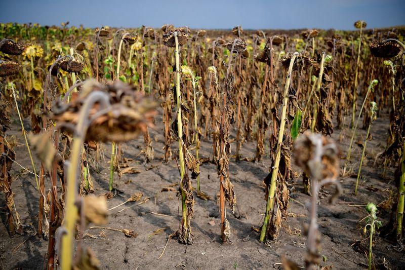 Nagyon rossz hírt hozott a meteorológiai szolgálat: egyelőre marad az aszály, és aggasztó a talaj vízhiánya