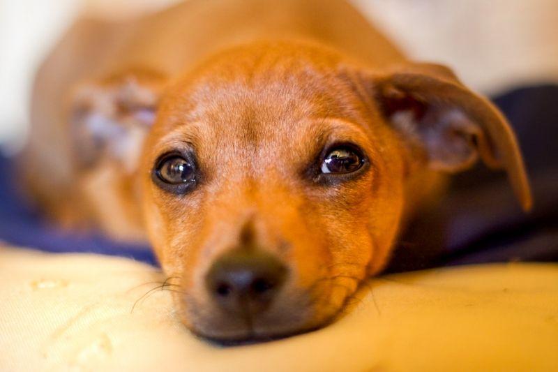 Felfüggesztett szabadságvesztést és pénzbüntetést kapott két olasz kutyacsempész Lentiben