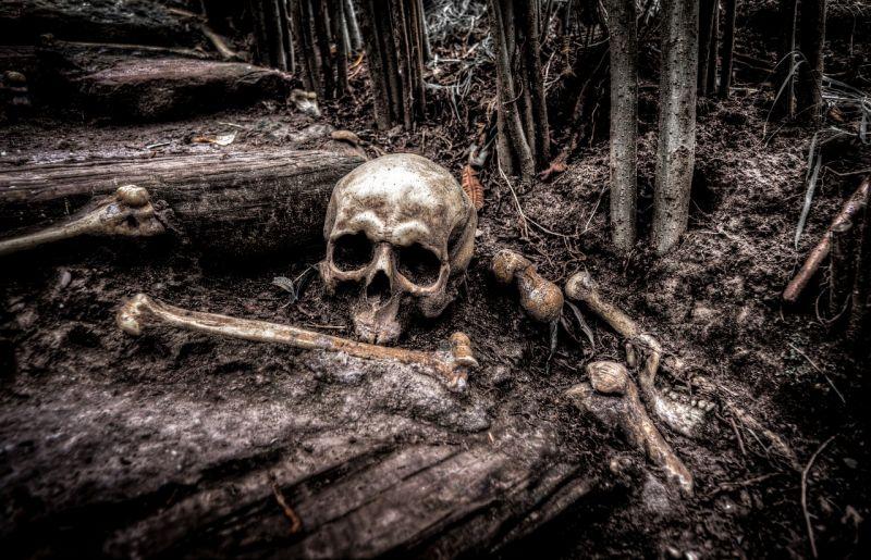 Emberi koponyát és combcsontot találtak a Dunából kihúzott Fordban