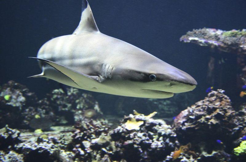Történelmi felfedezés az Atlanti-óceánban: óriási cápakeltetőt találtak