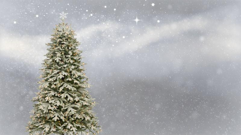 Közeleg a karácsony, idén drágábbak lesznek a fenyők