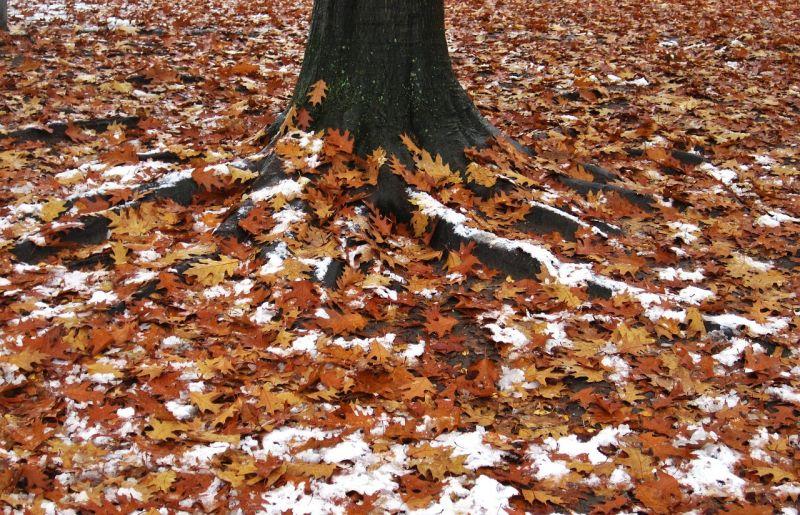 Az őszi nyár után egyből itt a tél: este már havazhat is több helyen
