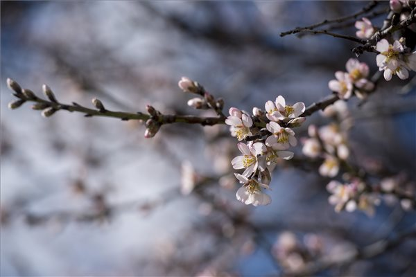 Tavaszias idő köszönt be a hétvégén