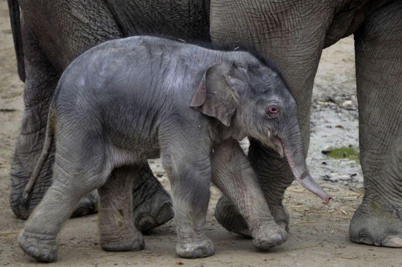 Páros kedvezménnyel csalogatja a szerelmeseket az Állatkert