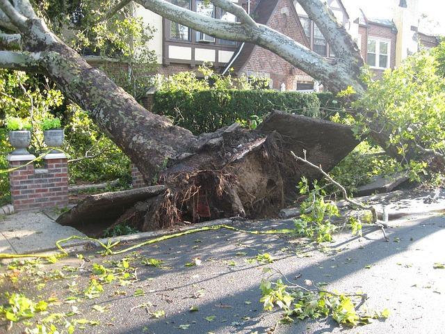 A szélvihar eddig a Dunakanyarban pusztított leginkább