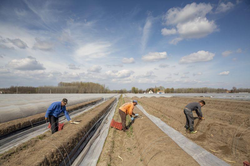 Migránsozva tiltakoznak a magyar gazdák az EU-támogatások megnyirbálása ellen