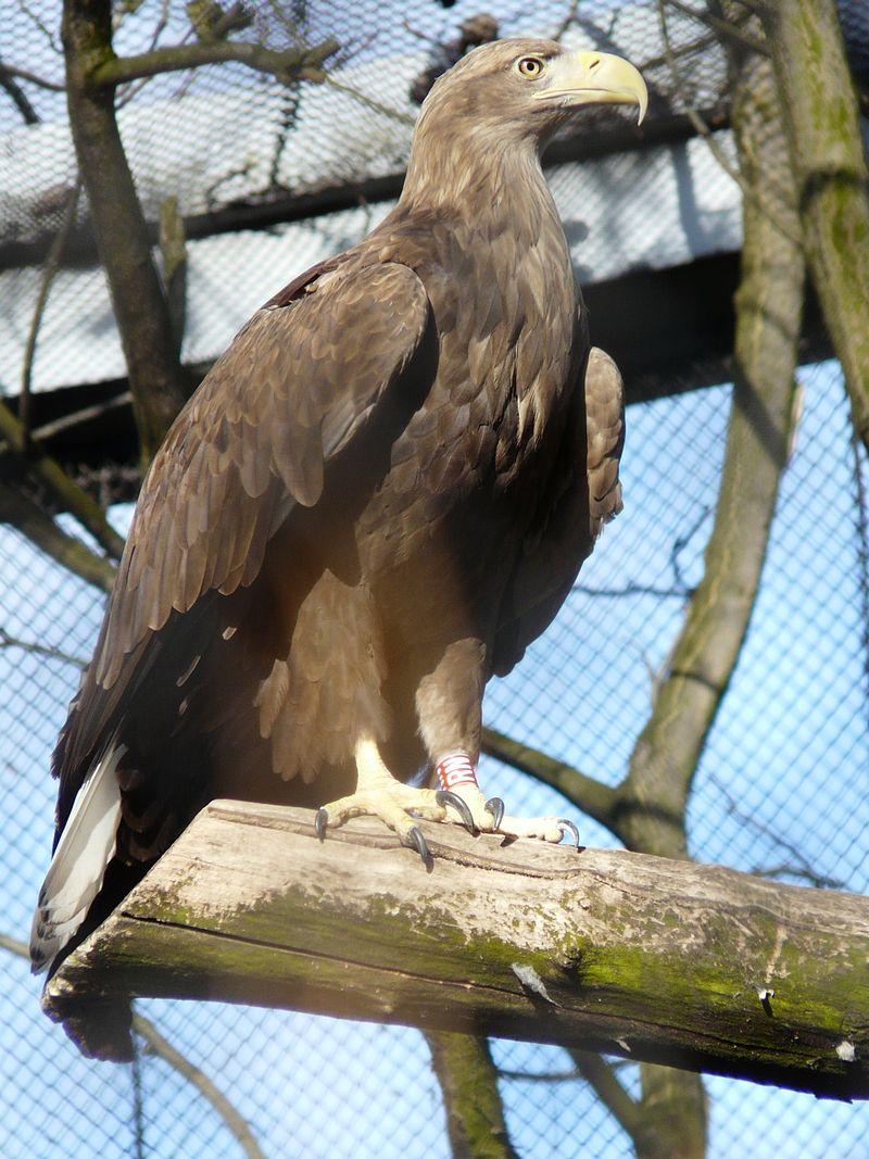 Réti sast és más vadállatokat öltek halomra méreggel a Duna-Dráva Nemzeti Parkban